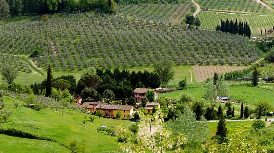 San Miniato e Certaldo - Campagna circostante il borgo di san Miniato.