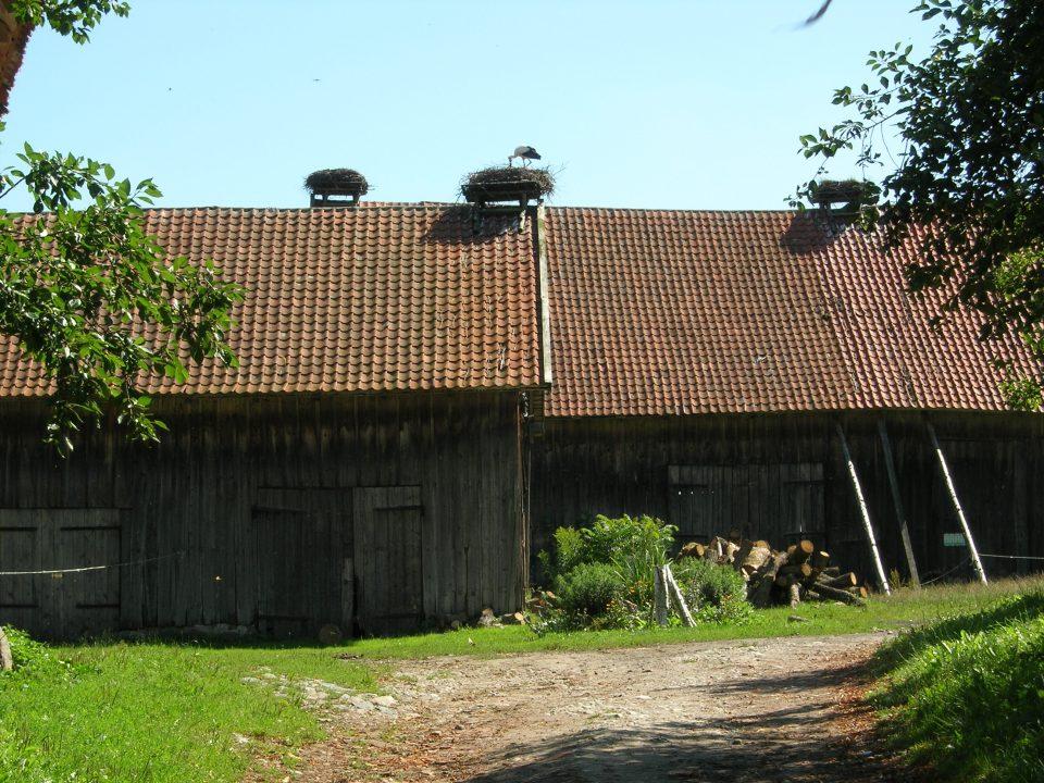 Zywkowo-Capanne del villaggio con nidi di cicogne