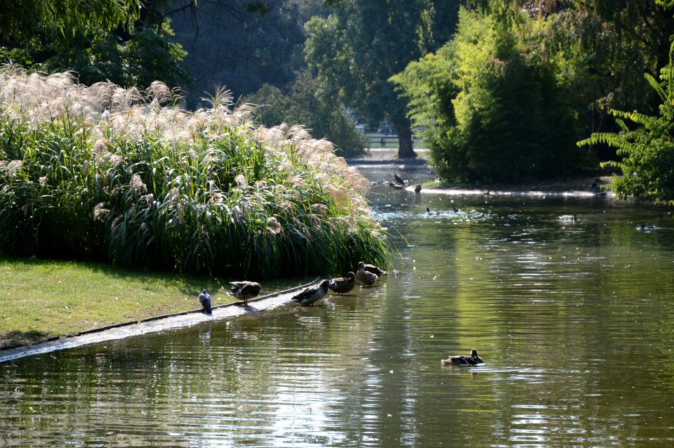 Vienna. LoStadtpark il parco più antico di Vienna.