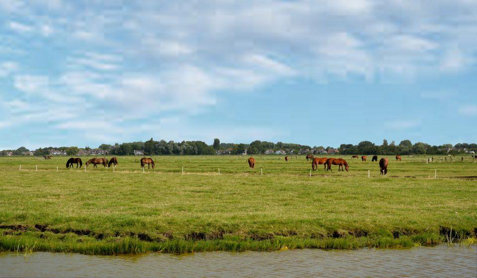 Edam Volendam Marken. Allevamento di cavalli a Marken.